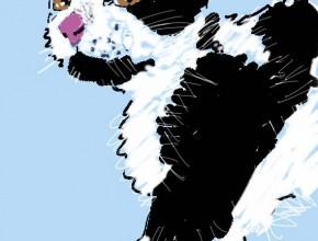 gatto di shiga ho